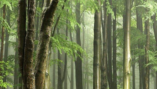 Jemné svetlo, les.jpg