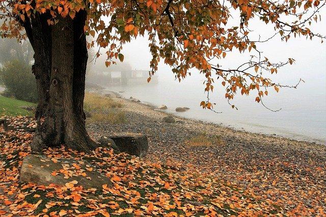 Strom pri jazere.jpg
